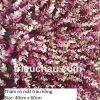 Thảm cỏ mắt trâu hồng