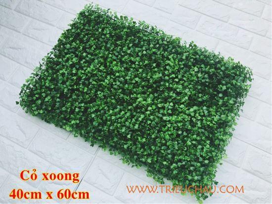 Thảm cỏ xoong nhựa